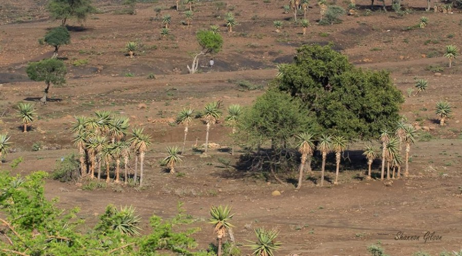 Drought in msinga 1